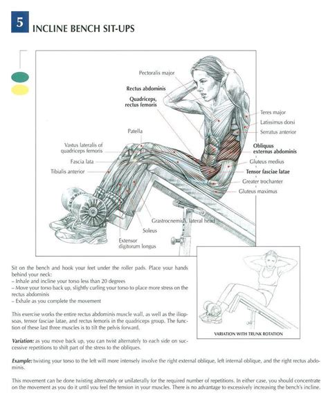 incline bench crunches 78 images about bodybuilding anatomy on pinterest
