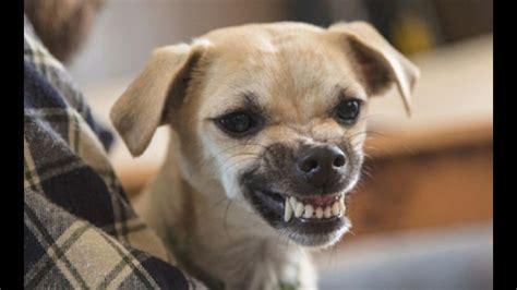 161 la ciencia lo dice los perros saben reconocer si alguien es una mala persona wapa pe