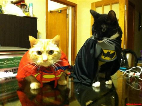 and cats superman and batman cats hq pictures of cats and kittens free pictures