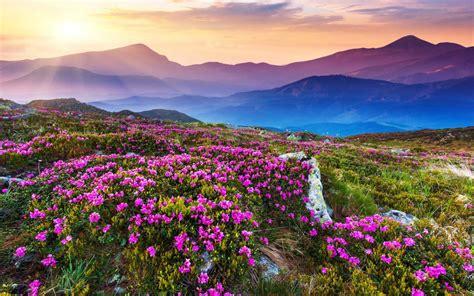 flower valley 1280 800 wallpaper guide to the 7 most popular treks among delhites