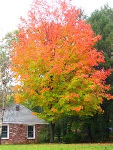 tree colors has anyone noticed the trees are already changing color