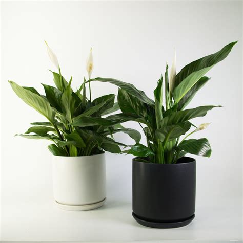 plant  pot nz modern indoor plants contemporary