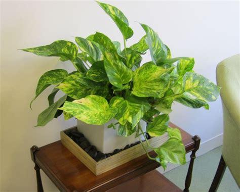 pianta interno tipologie di piante da interno piante appartamento