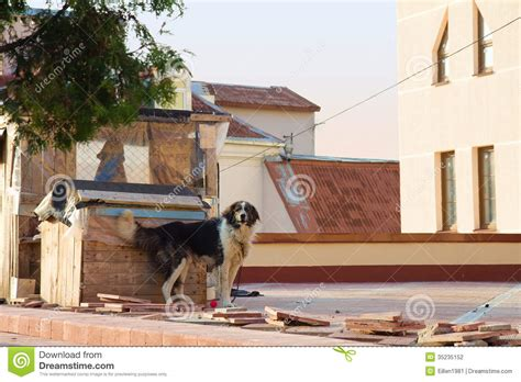roof dog dog on the roof stock photography image 35235152