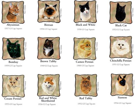 various breeds different breeds of cats with pictures and names cats types