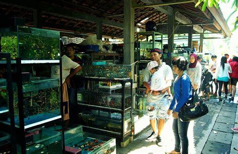 Jual Pot Anggrek Jogja jogja never ending asia birds market oyin ayashi