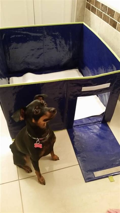 training dog not to pee in house 25 best ideas about indoor dog potty on pinterest dog