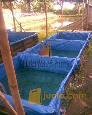 Jual Bibit Ikan Lele Sangkuriang Jakarta bibit lele sangkuriang dan pelatihan budidaya lele sangkuring bandung jualo