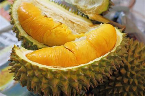 Bibit Durian Bawor promo wa 0812 8560 4125 jual bibit durian unggul