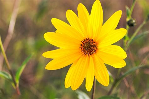 Search Single On Single Yellow Flower Photohdx