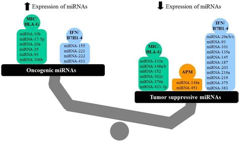Table Function The Role Of Immune Modulatory Micrornas In Tumors Intechopen