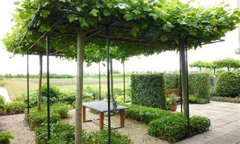 Sichtschutz Garten Ideen 3098 by 322 Besten Garden Bilder Auf Landschaftsbau