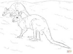 red kangaroo coloring page two red kangaroos coloring page free printable coloring