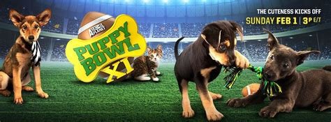 puppy bowl adoptions animal planet puppy bowl adoptions 2015 photo