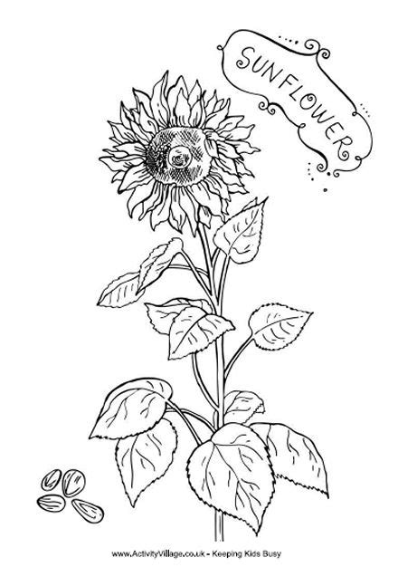 sunflower coloring pages preschool 16 sunflower coloring pages print color craft