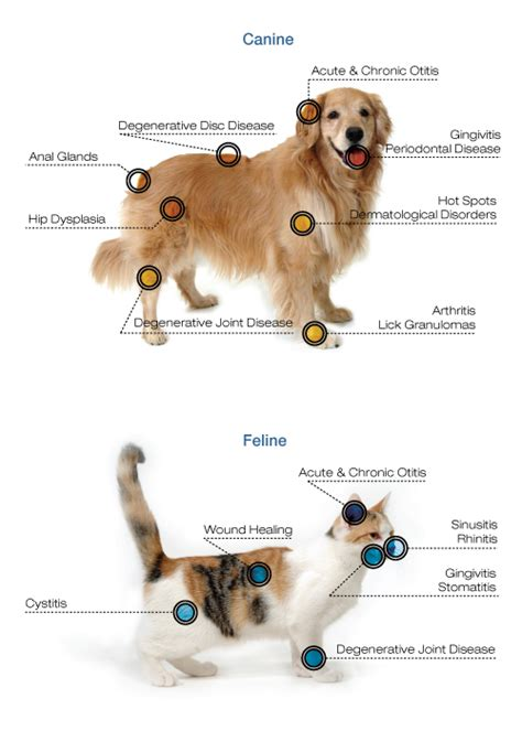 cold laser therapy for dogs cold laser