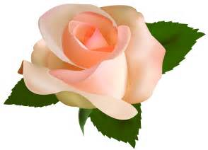 beautiful rose png clipart clipart