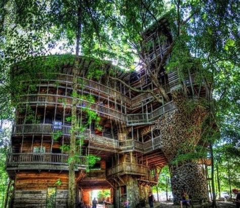 Treehouse Condos - largest tree house in the world cool things shared on facebook