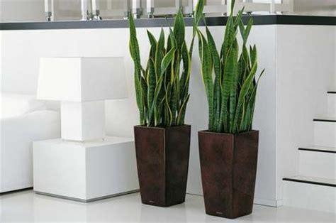 piante appartamento buio resegone notizie da lecco e provincia 187 piante da