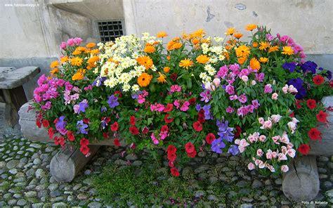 foto per desktop fiori sfondi per desktop i fiori sfondo 024