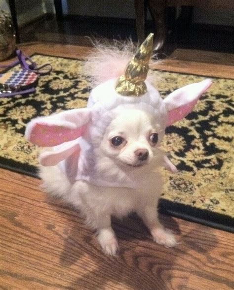 unicorn puppy unicorn costume dogs in clothes chihuahuas costumes and unicorns