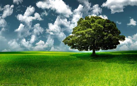 Asus Wallpaper Tree | re jelly bean friss 237 t 233 si k 246 rk 233 p mobilarena hozz 225 sz 243 l 225 sok