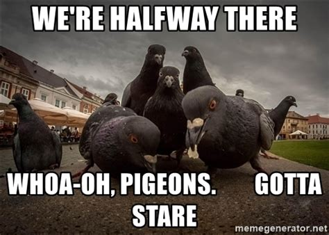 Halfway There Meme - we re halfway there whoa oh pigeons gotta stare