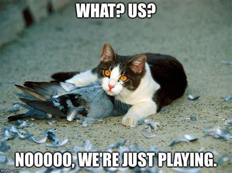 Pussy Cat Meme - cute cat imgflip
