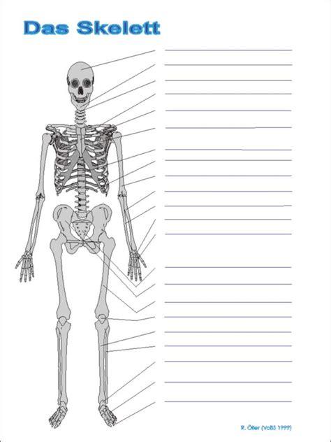 Beschriftung Skelett by Skelett