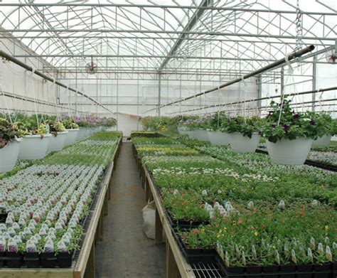 commercial light deprivation greenhouse commercial light deprivation greenhouse 28 images