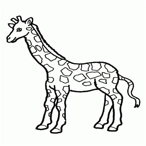 related to dibujo jirafas para colorear paginas de dibujos jirafas incre 237 ble lindas p 225 ginas para colorear de jirafas beb 233