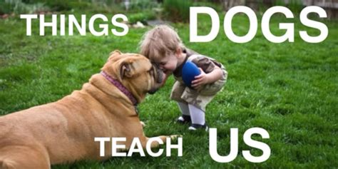 puppies are us 12 things dogs teach us or kittens puppies and more