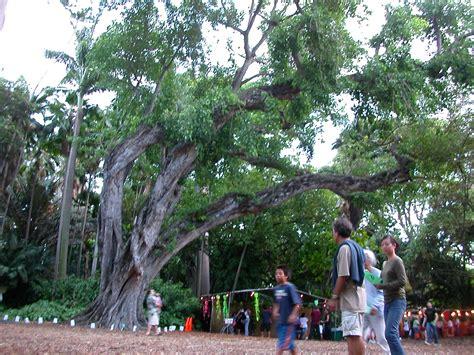 Foster Botanic Garden Baobab In Foster Botanical Garden Downtown Honolulu