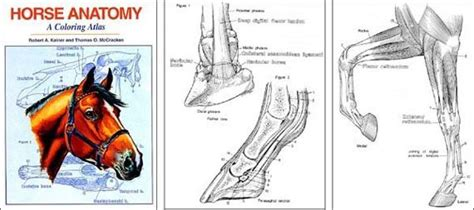 veterinary anatomy coloring book image result for http www hoofprints images