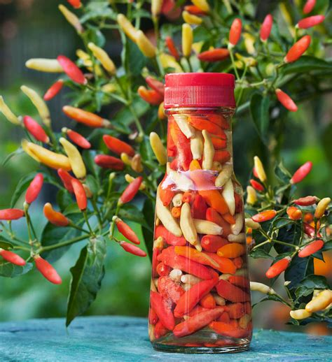 Grow Herbs In Kitchen by Tabasco Pepper Small Size Big Flavor Amp Heat