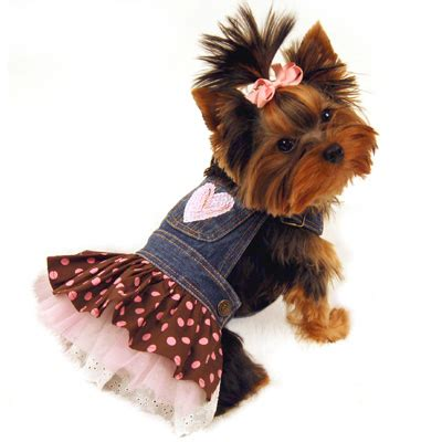 yorkie clothes clothes and teacup yorkies breeds picture