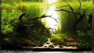 2012 aga aquascaping contest entry 187