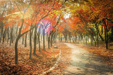path nature forest desktop wallpapers landscape leaf