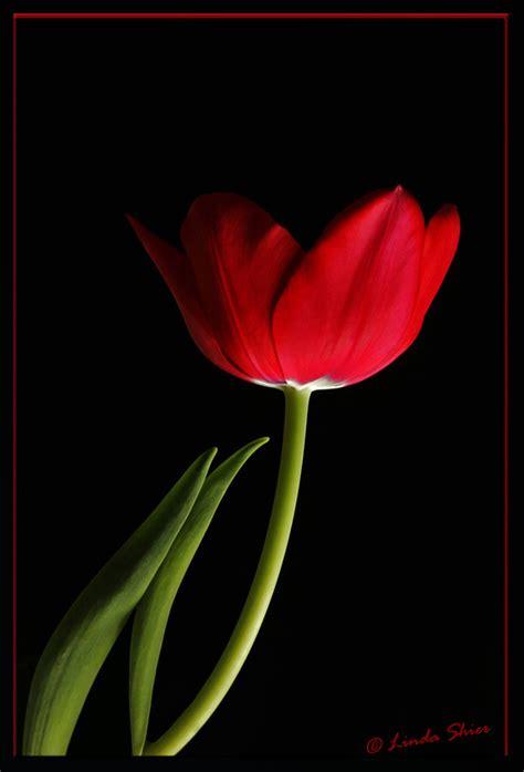 imagenes animadas romanticas image gallery imagenes de flores romanticas