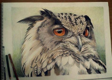 dibujos realistas buho buhos dibujos a lapiz www pixshark com images