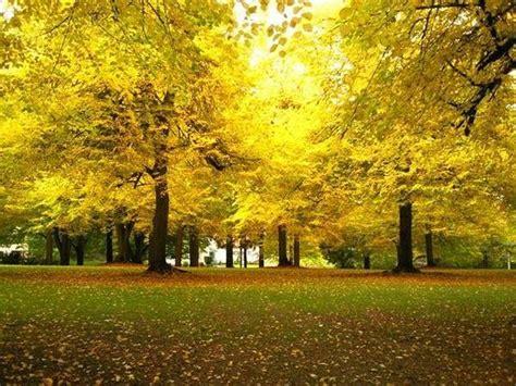 Park Portland Oregon by Laurelhurst Park Portland Reviews Of Laurelhurst Park