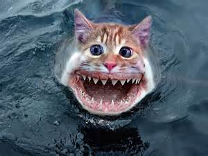 Displaying 12 gt images for funny pictures of sharks