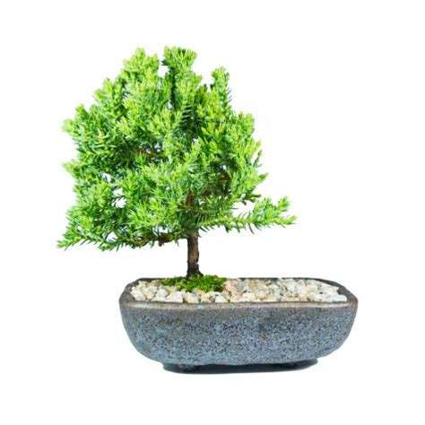 Valutec Net Gift Card Balance - bonsai gifts melbourne gift ftempo