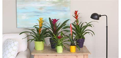 light indoor plants
