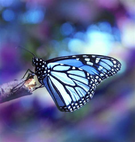beautiful things in nature www pixshark com images beautiful things in nature www pixshark com images