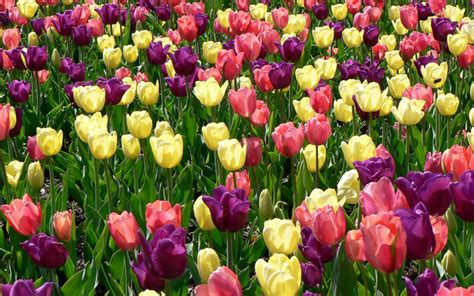 photos of spring flowers wallpapers spring flowers wallpapers