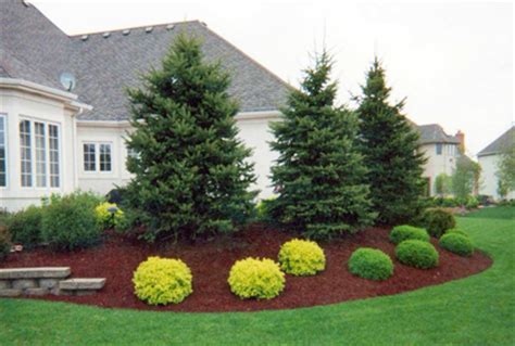 Evergreen Landscaping Ideas Landscaping With Evergreens Ideas Car Interior Design
