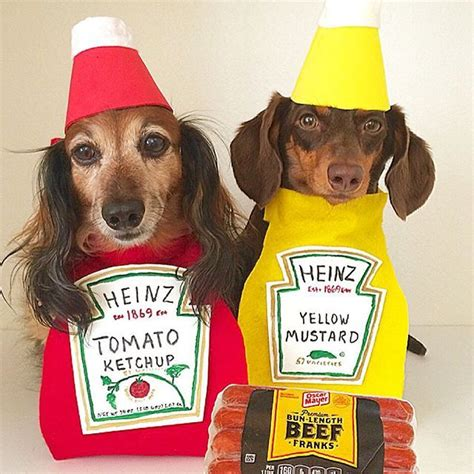 can dogs eat ketchup dogs celebrate nationalhotdogday with dogs am new york