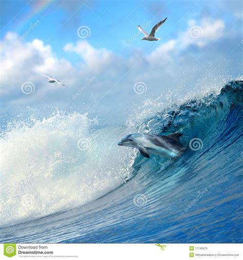 Sprei Sea Dolphine spray rainbow of the waves royalty free stock photo