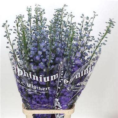 Blue White Dewi Top delphinium dewi amsterdam 80cm wholesale flowers